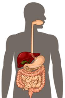overgang en darmen